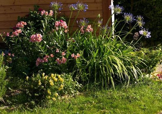 Le jardin paysagé